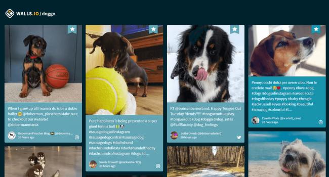 free-social-wall-doggo