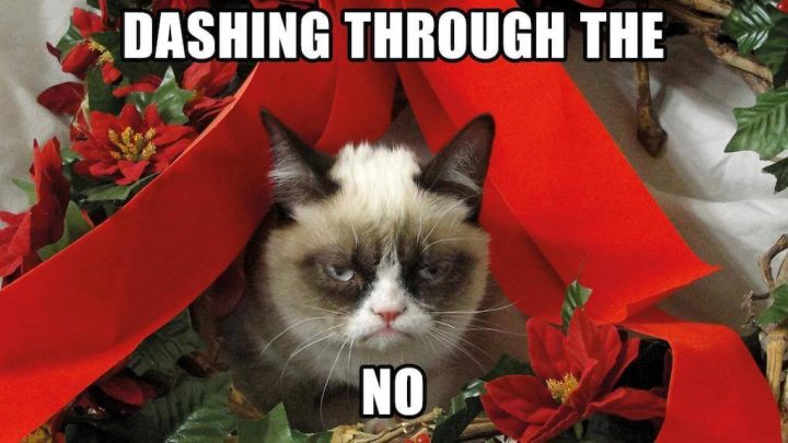 Grumpy Cat, dashing through the no