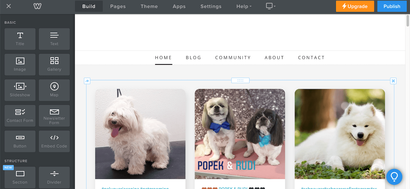 Screenshot showing how to embed a social wall with cute dog pics using Weebly.