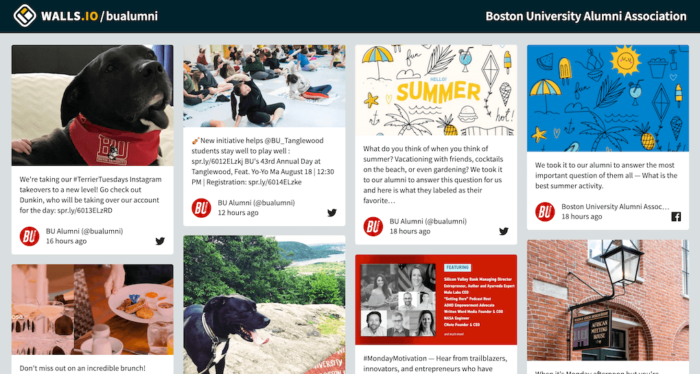Screenshot of the social wall set up by the Boston University Alumni Association. It shows posts by the association, engaging alumni in various ways. There's a dog in 2 pictures, a post announcing an article about the best summer activities, as well as posts announcing events.