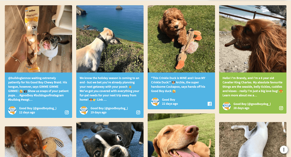 Screenshot of the Good Boy social wall, showing posts of happy dogs enjoying nature, toys or a Good Boy treat.
