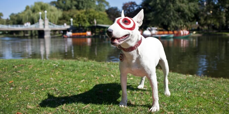 A white bull terrier with the red bullseye target logo painted to circle his left eye. He's standing on a grassy area in front of a body of water with boats in the background.