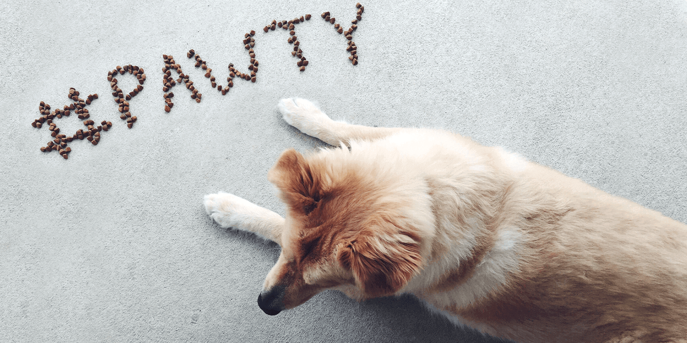 Top-down shot of a yellow-haired dog lying in front of a sign made of treats that says #PAWTY