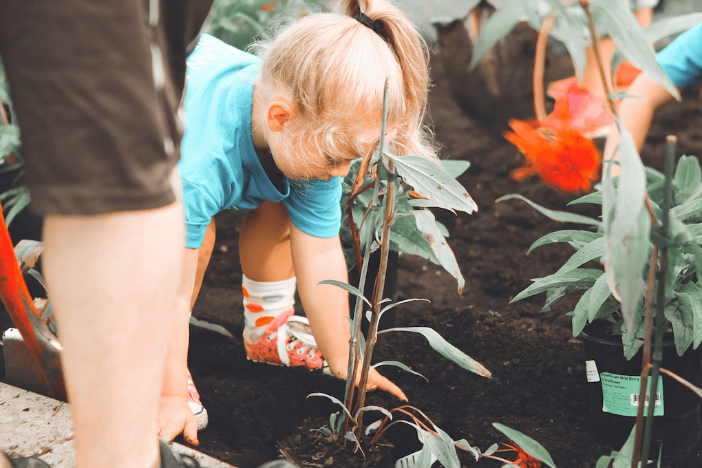 A blonde, pony-tailed child in a bright blue t-shirt is setting a plant in soil, using their hands to cover it's roots with soil. In the background, we see the arm of another kid doing the same. In the foreground, we see the leg of an adult person standing by.