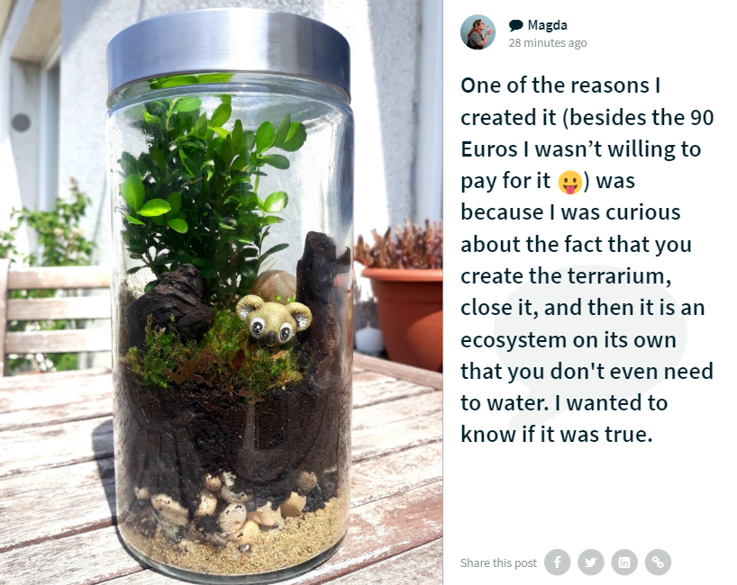 "Social wall post by Magda. The image shows a terrarium in a tightly closed jar, layers of sand, wood and greenery. A little plastic koala is in the jar as well, peeking out from amidst the greenery. The caption reads: ""One of the reasons I created it (besides the 90 Euros I wasn't willing to pay for it 😛) was because I was curious about the fact that you create the terrarium, close it, and then it is an ecosystem on its own that you don't even need to water. I wanted to know if it was true."""