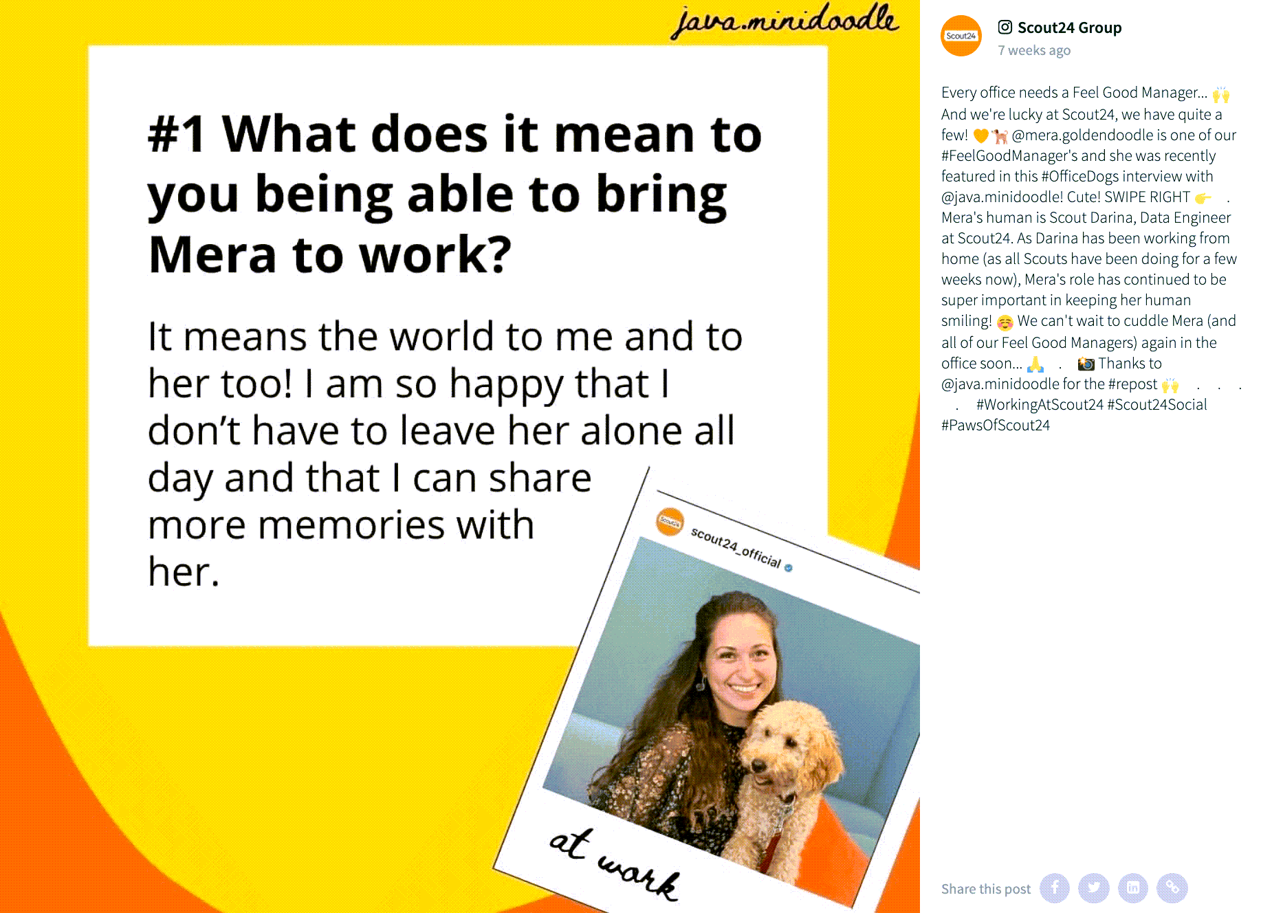 "Instagram post by Scout24 Group. The image shows a field with the following question and answer: ""#1 What does it mean to you being able to bring Mera to work?"" ""It means the world to me and to her too! I am so happy that I don't have to leave her alone all day and that I can share more memories with her."" Overlaid at the bottom right is a polaroid-style image of a smiling person with long hair who is holding a golden labradoodle dog. At the bottom of the polaroid it says ""at work"".  The post's caption reads: Every office needs a Feel Good Manager... 🙌 And we're lucky at Scout24, we have quite a few! 🧡🐕 @mera.goldendoodle is one of our #FeelGoodManager's and she was recently featured in this #OfficeDogs interview with @java.minidoodle! Cute! SWIPE RIGHT 👉⠀ .⠀ Mera's human is Scout Darina, Data Engineer at Scout24. As Darina has been working from home (as all Scouts have been doing for a few weeks now), Mera's role has continued to be super important in keeping her human smiling! ☺️ We can't wait to cuddle Mera (and all of our Feel Good Managers) again in the office soon... 🙏⠀ .⠀ 📸 Thanks to @java.minidoodle for the #repost 🙌 ⠀ . ⠀ . ⠀ . ⠀ . ⠀ #WorkingAtScout24 #Scout24Social #PawsOfScout24⠀"