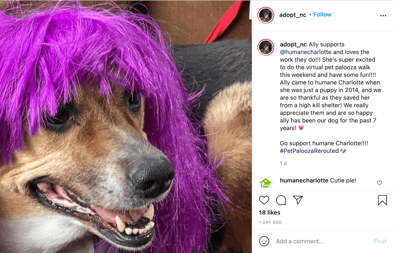 Screenshot of an Instagram post by @adopt_nc. The photo in the post shows the head of a sand-coloured dog with a purple wig on their head. The caption reads:  Ally supports @humanecharlotte and loves the work they do!!! She's super excited to do the virtual pet palooza walk this weekend and have some fun!!!! Ally came to humane Charlotte when she was just a puppy in 2014, and we are so thankful as they saved her from a high kill shelter! We really appreciate them and are so happy ally has been our dog for the past 7 years! 💗  Go support humane Charlotte!!!! #PetPaloozaRerouted 🐶