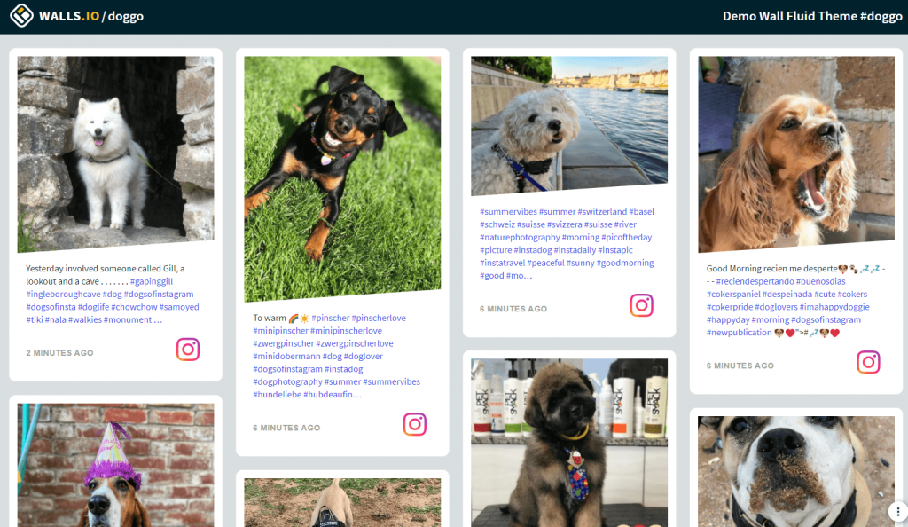 An example of how to customise an nstagram feed embed on a website using the Walls.io Fluid theme and CSS. A social feed with dog photos.