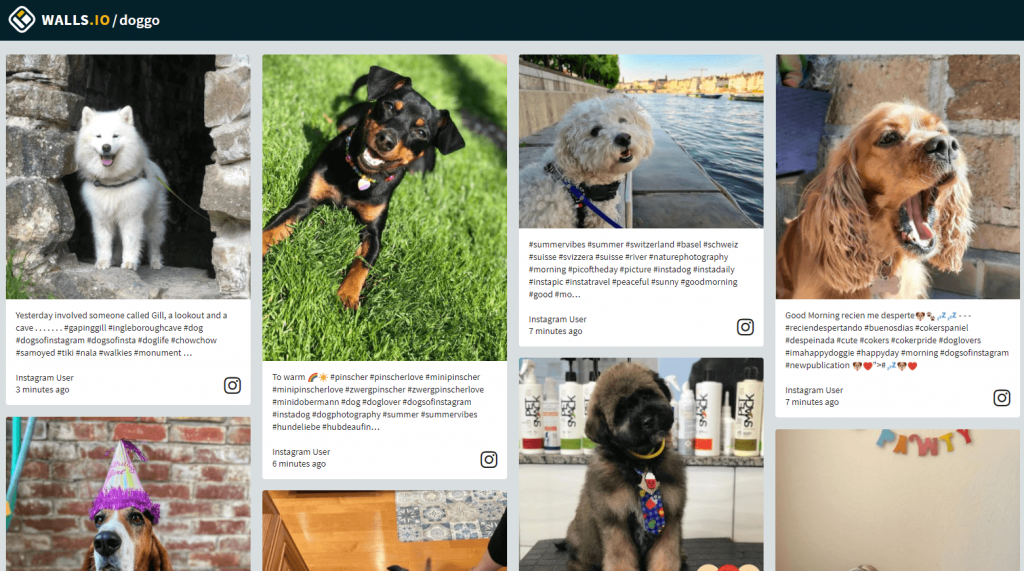How to embed an Instagram feed on a website example using the Walls.io Fluid theme. A social feed with dog photos.