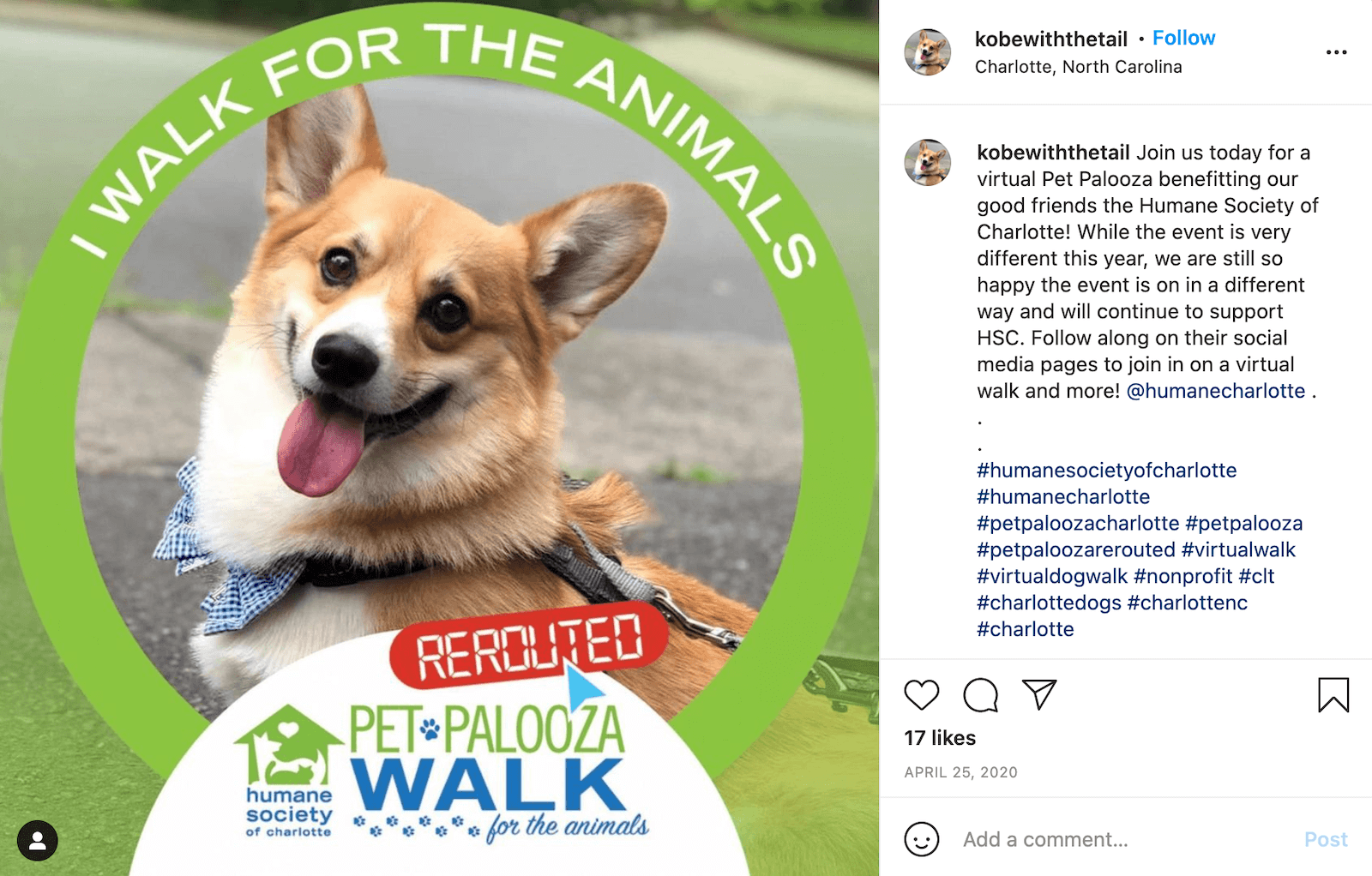 """Instagram post by user @kobewiththetail shows a photo of a smiling corgi with blue-and-white gingham bow tie within a social media frame for Pet Palooza Rerouted that says """"I walk for the animals"""". The caption reads: Join us today for a virtual Pet Palooza benefitting our good friends the Humane Society of Charlotte! While the event is very different this year, we are still so happy the event is on in a different way and will continue to support HSC. Follow along on their social media pages to join in on a virtual walk and more! @humanecharlotte . . . #humanesocietyofcharlotte #humanecharlotte #petpaloozacharlotte #petpalooza #petpaloozarerouted #virtualwalk #virtualdogwalk #nonprofit #clt #charlottedogs #charlottenc #charlotte"""