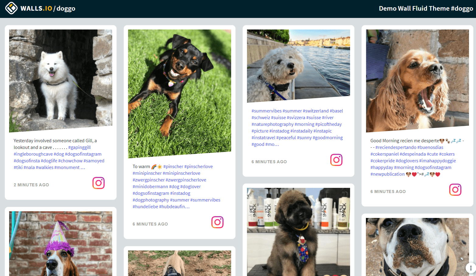 An example of how to customise an Instagram feed embed on a website using the Walls.io Fluid theme and CSS. A social feed with dog photos.